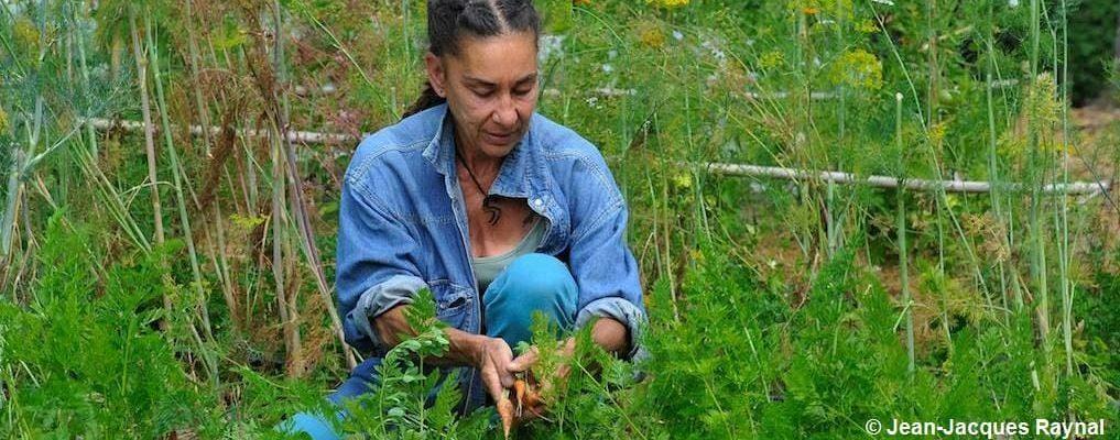 Jardinière qui éclaircie ses carottes au potager