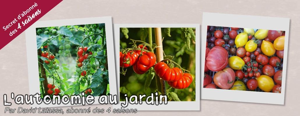 Récolter des tomates de juillet à décembre (7/12) 1