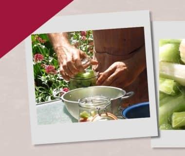 Conserver la rhubarbe sans cuisson ni congélation (9/12)