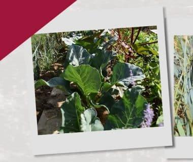 Ressemer en été pour les récoltes d'hiver (10/12) 1