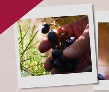 Faire son jus de raisin (12/12) 1
