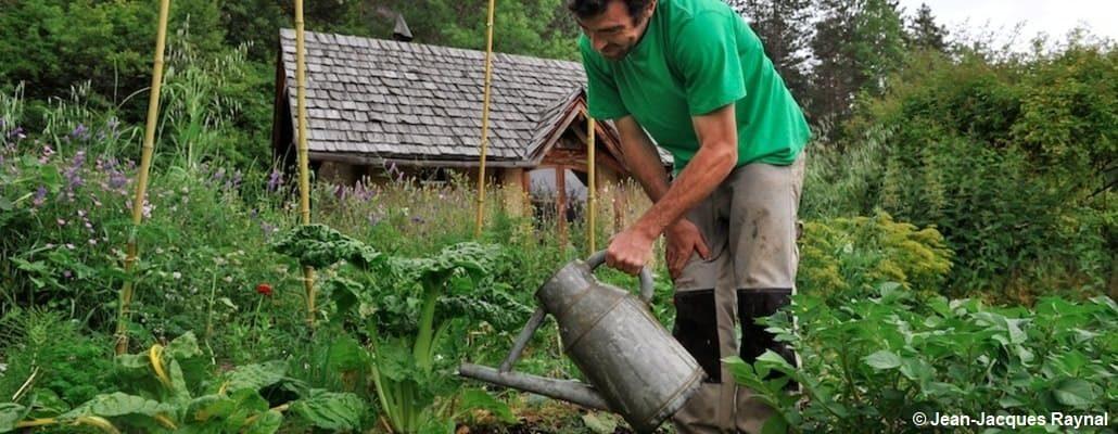Le jardinier arrose ses légumes et fleurs au potager