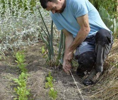 Mesure des distances au milieu des épinards par le jardinier