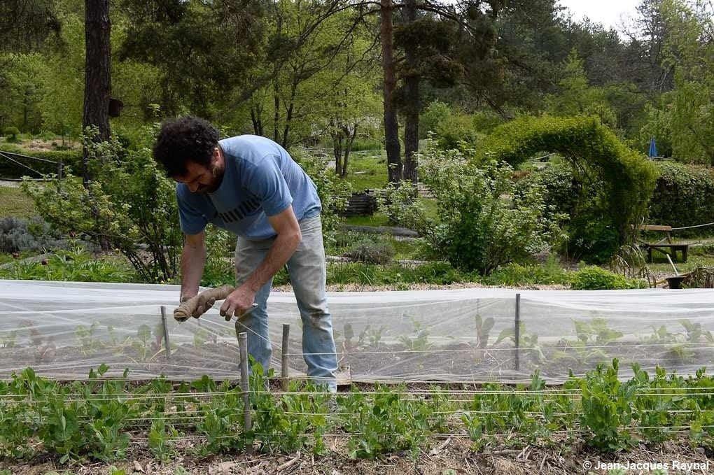 Le jardinier qui tuteure ses petits pois