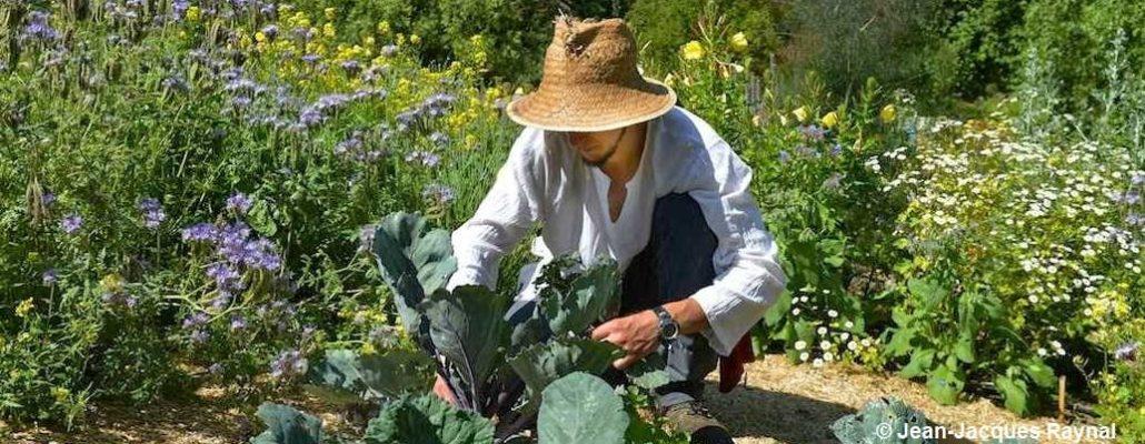 Jardinier qui soigne ses choux