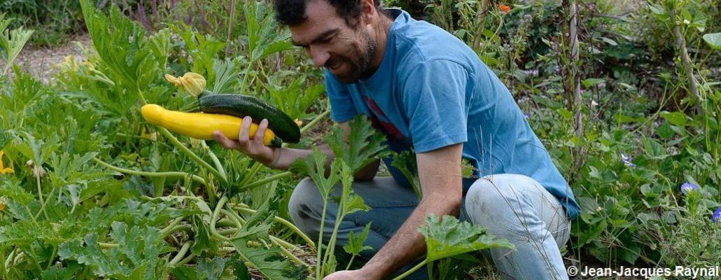 Le jardinier qui tient deux courgettes dans sa main