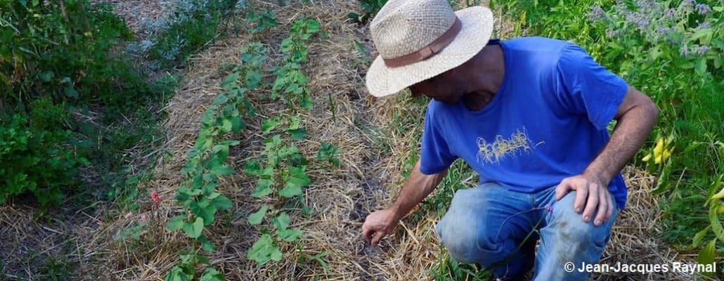 Jardinier qui regarde ses semis de mâche