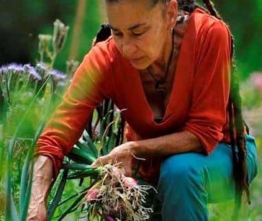 La jardinière récolte ses oignons
