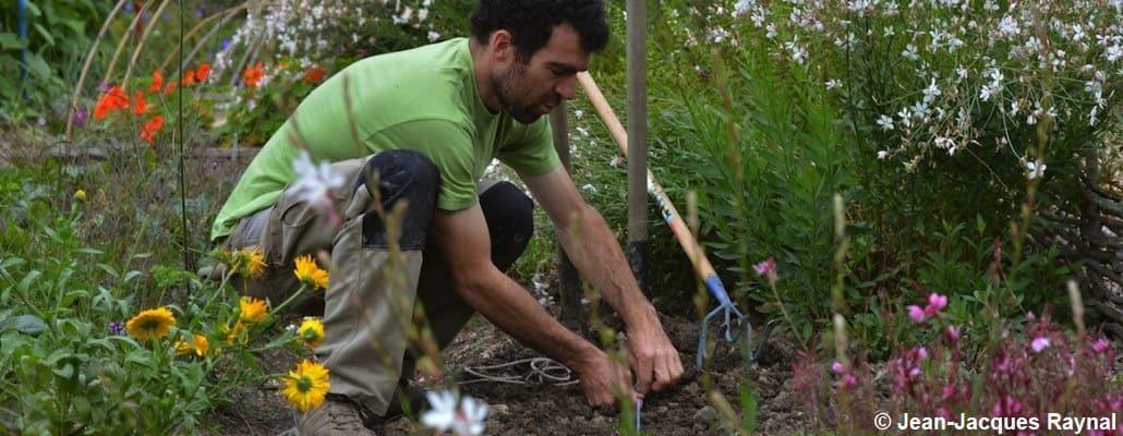 Le jardinier entrain de semer ses radis d'hiver