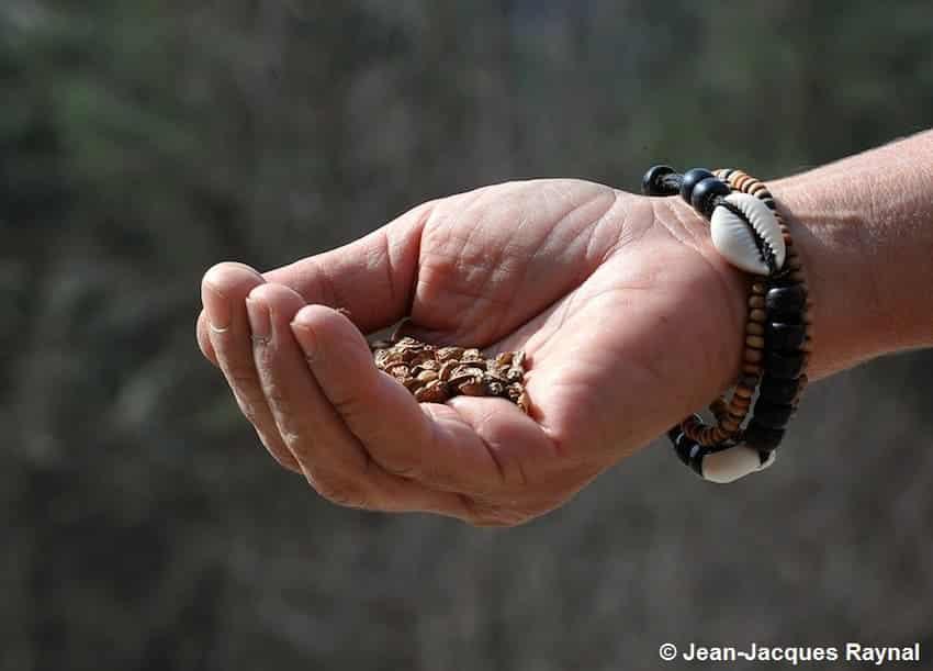 Une main tenant des graines