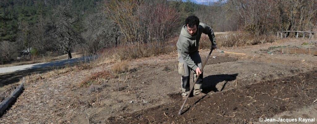 Pascal Aspe qui enfouit ses engrais verts gelés