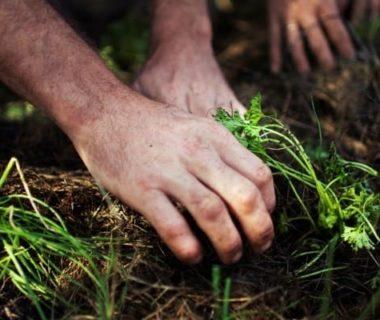 Des mains qui se baladent dans la terre