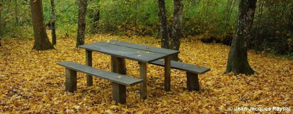 Une table de pique-nique seule, entourée de feuilles d'automnes au sol, bien orangées