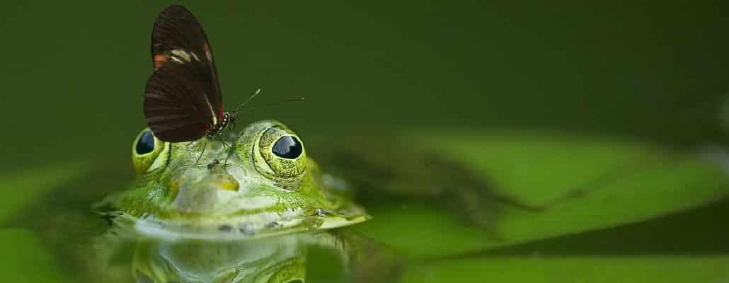 Photo de grenouille et de papillon