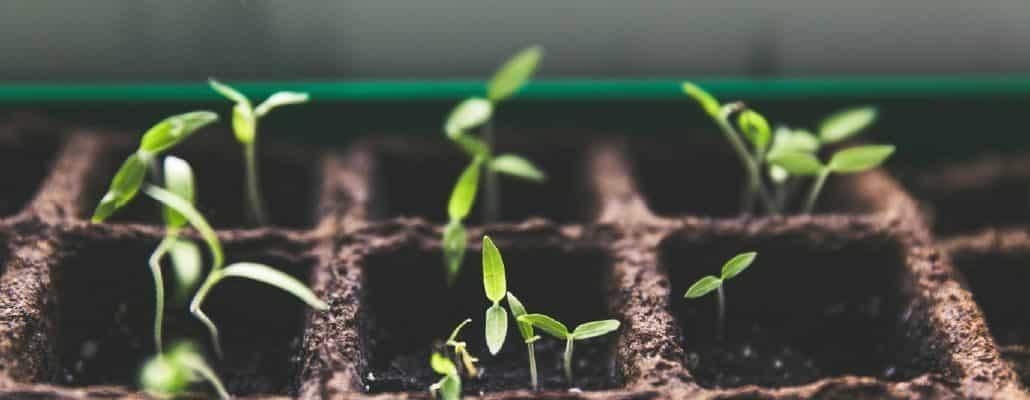 Photo de semis sains