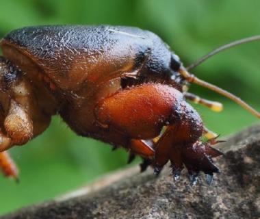 Photo de l'insecte