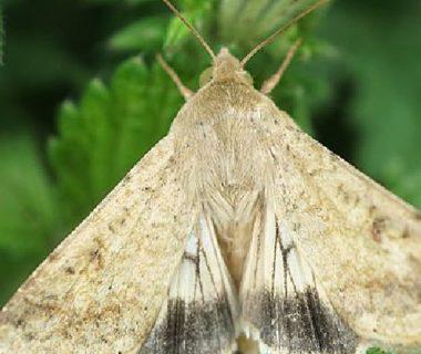 Papillon ailes ouvertes