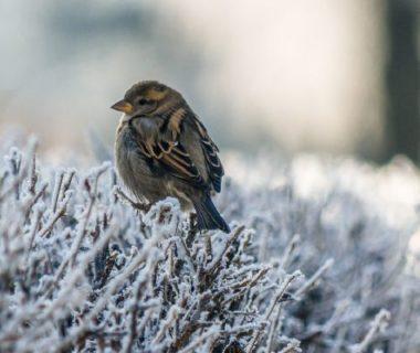 Oiseaux sur des brindilles enneigées