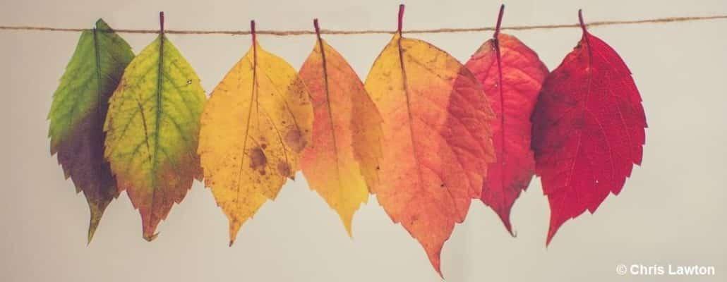 Des feuilles épinglées sur un fil, formant un dégradé de couleurs du vert au rouge (de gauche à droite)