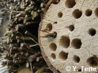 Gros plan sur un hôtel à insectes fabriqué avec divers matériaux dont du chêne