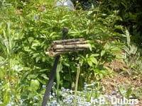 Un fagot de branches de sureau, disposé en hauteur