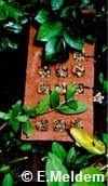 Brique et tiges de roseau