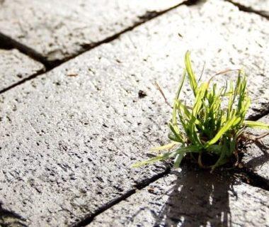 Une petite pousse d'herbe qui a traversé le béton