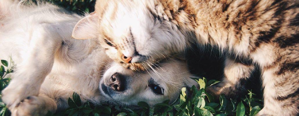 Chien et chat qui se câlinent