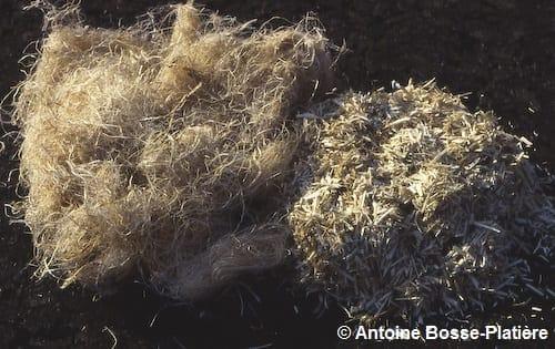 Filasse (fibre) de chanvre et chènevotte