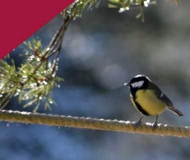 L'hiver au jardin : accueillir les oiseaux