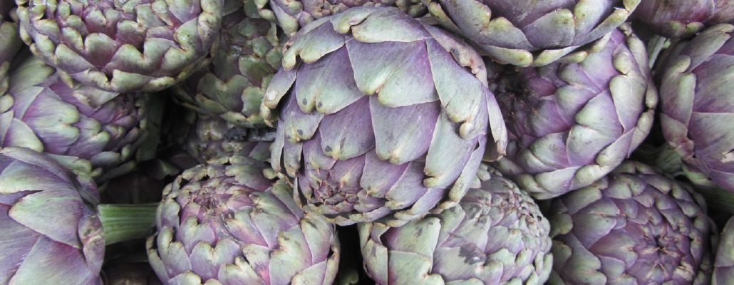 Boutons de fleurs d'artichauts