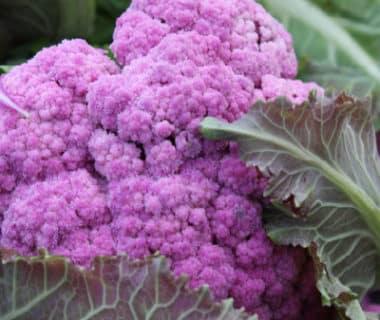 Chou-fleur à la pomme violette