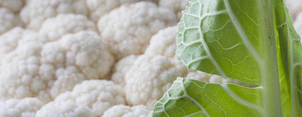 Culture du chou-fleur : semis, entretien et récolte