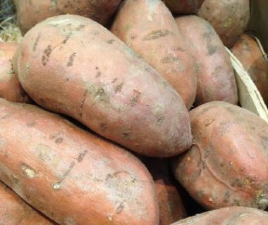 Tubercules de patate douce