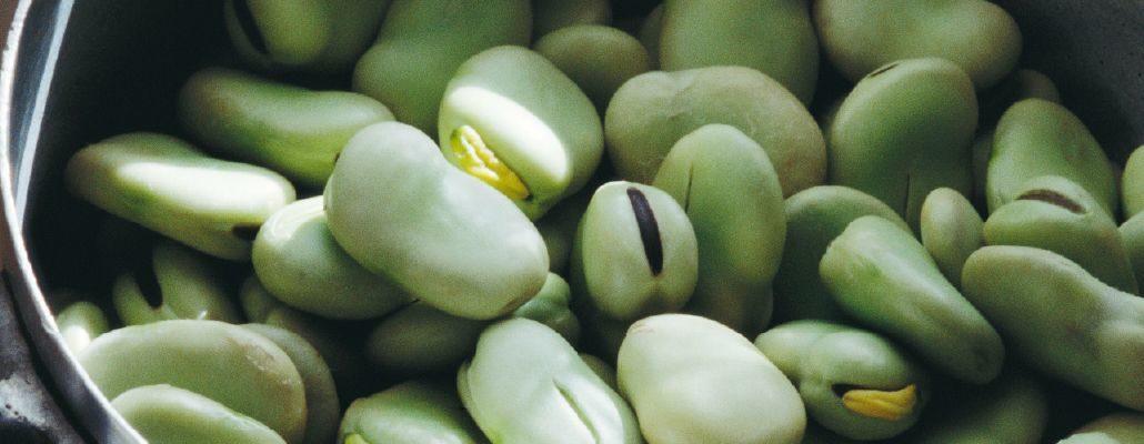 Quand et comment semer les fèves au potager ?