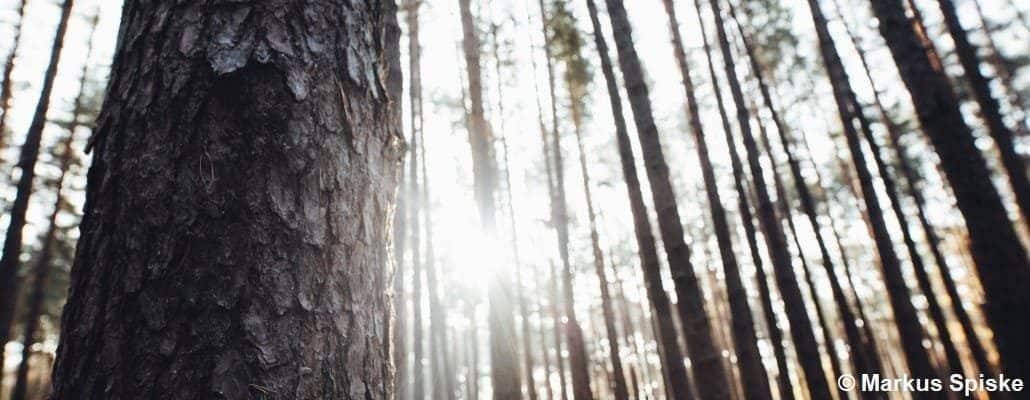 Lumière du soleil qui passe à travers les troncs d'arbres