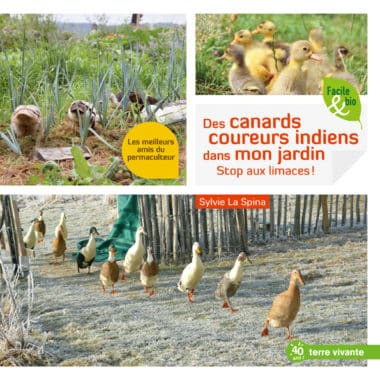 Des canards coureurs indiens dans mon jardin