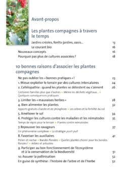 Plantes compagnes au potager bio 3