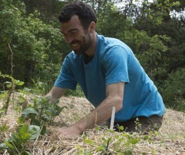 Jardinier qui plante des crosnes au potager