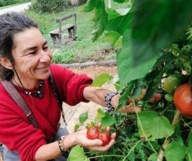 La jardinière, heureuse de récolter ses tomates rouges