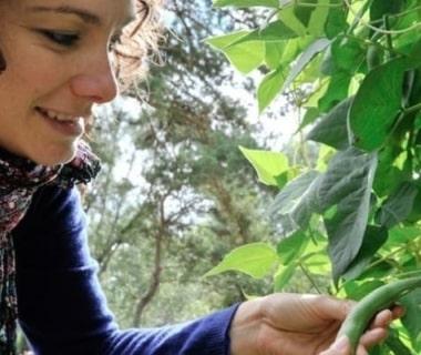 Une jeune femme qui récolte ses haricots avec sourire