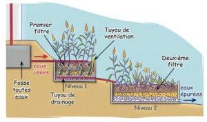 Schéma montrant le fonctionnement d'un lit vertical planté de roseaux