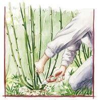 Dessin montrant un jardinier qui coupe des pousses d'osier
