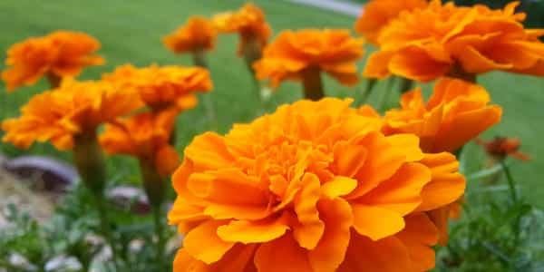 5 fleurs qui favorisent la biodiversité