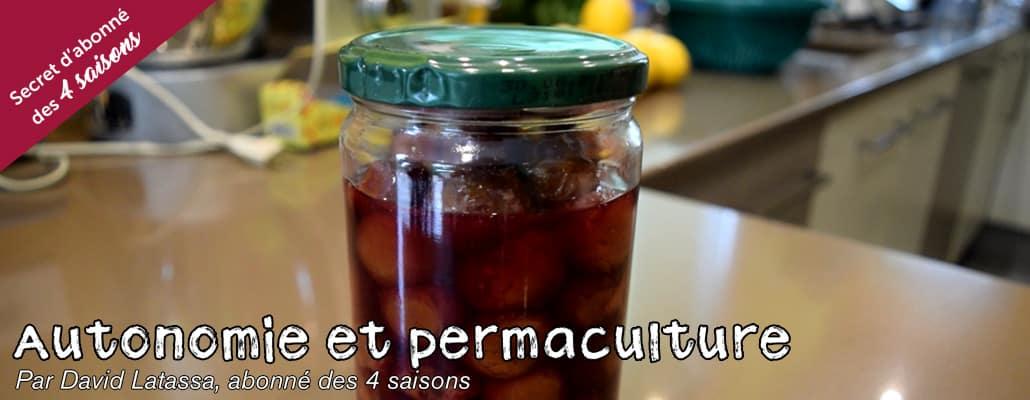 Conserver les prunes de différentes façons