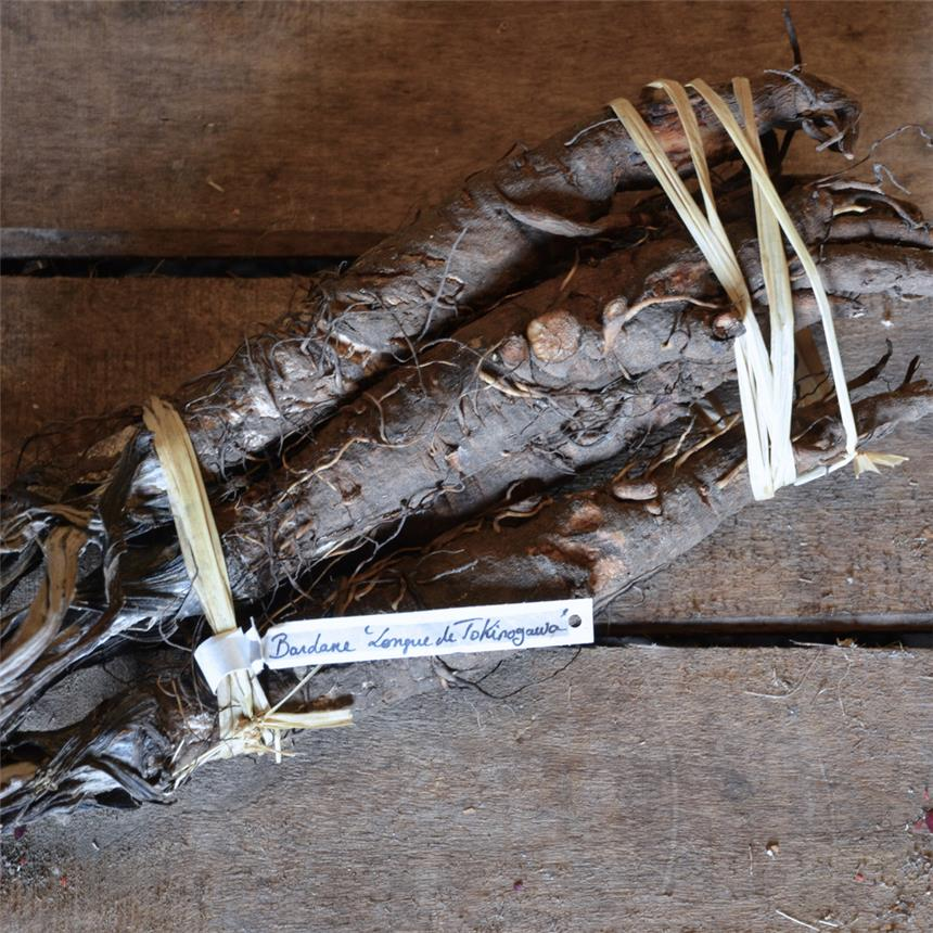 Graines Bardane Japonaise Takinogawa long bio – Ferme de Sainte Marthe