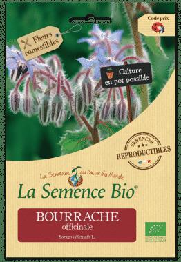 Graines Bourrache officinale bio - La semence bio 1