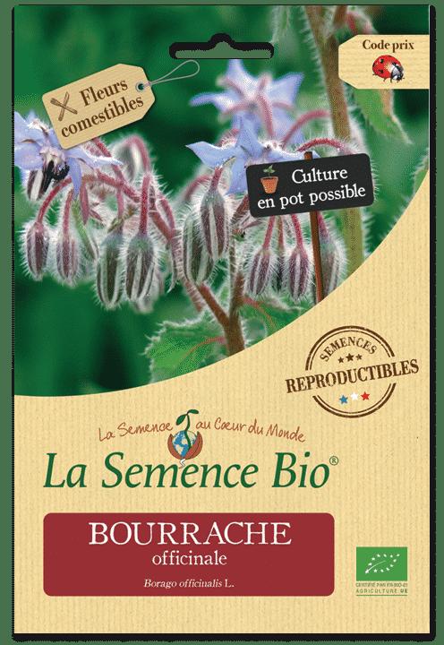 Graines Bourrache officinale bio – La semence bio 1