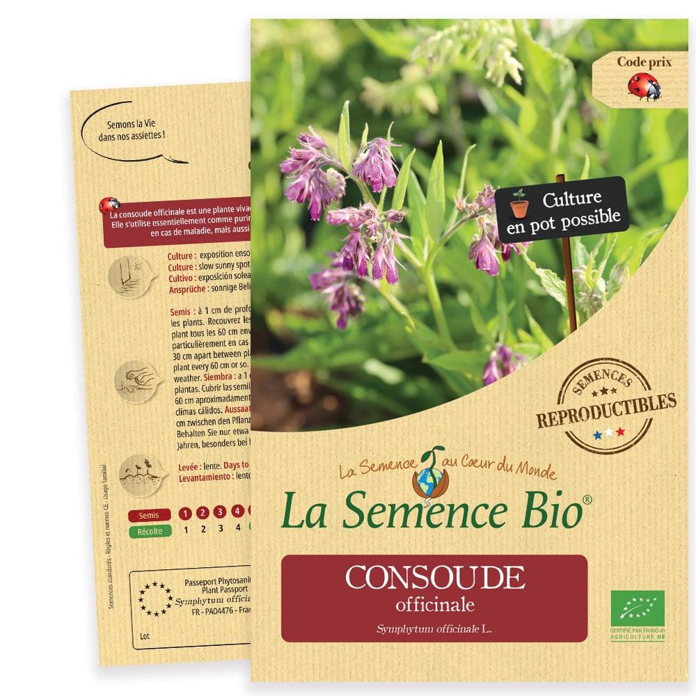Graines Consoude officinale bio – La semence bio 1