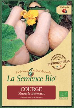 Graines Courge musquée Butternut Bio - La semence bio